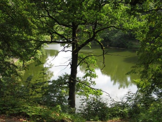 פארקים בליטא